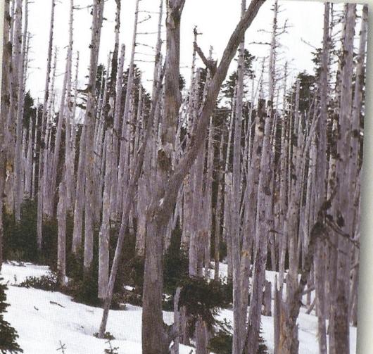 1987年奥日光で2500ヘクタールの森林枯死